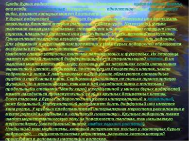 Среди бурых водорослей отсутствуют одноклеточные и колониальные формы, все ос...