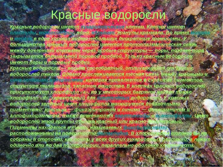 Красные водоросли Красные водоросли имеют эукариотические клетки. Клетки имею...