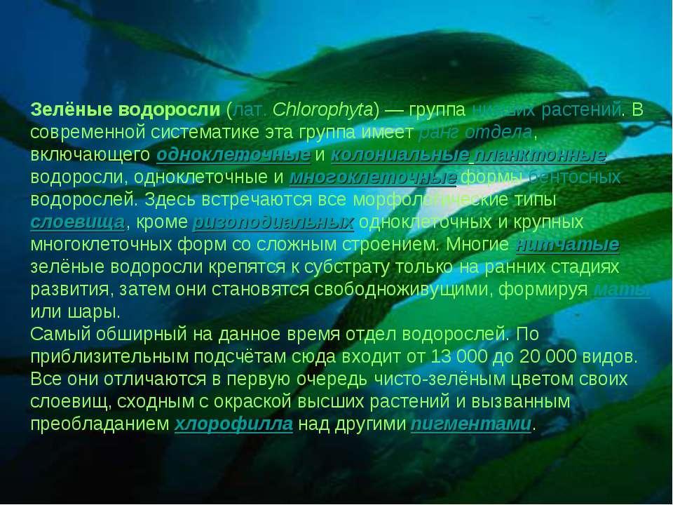 Зелёные водоросли (лат.Chlorophyta) — группа низших растений. В современной ...