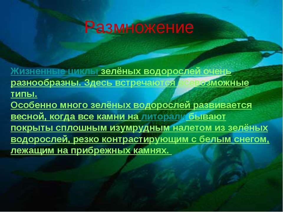 Размножение Жизненные циклы зелёных водорослей очень разнообразны. Здесь встр...