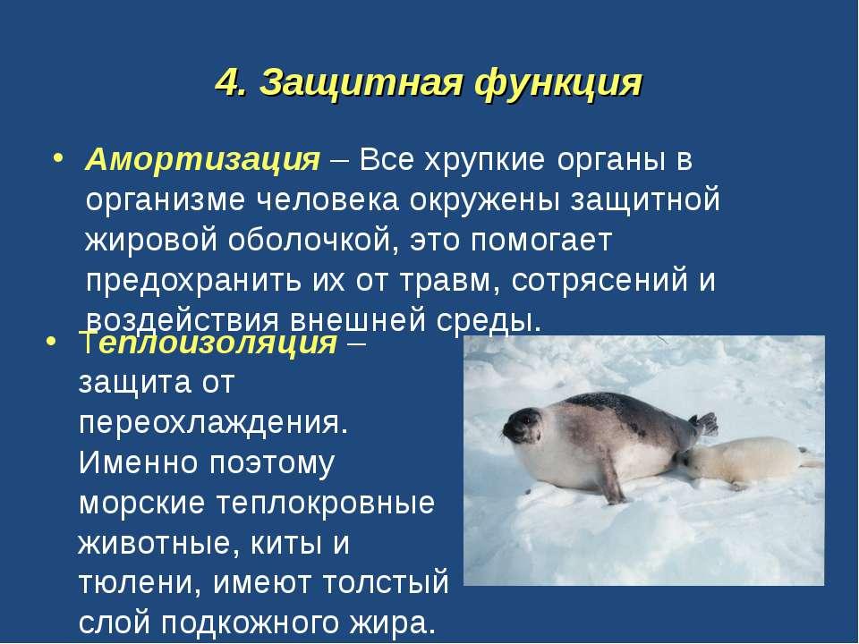 4. Защитная функция Амортизация – Все хрупкие органы в организме человека окр...