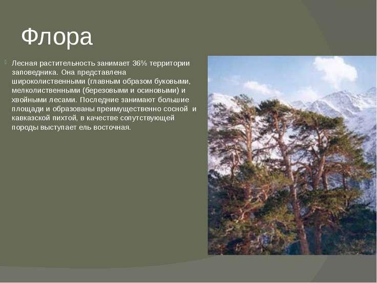 Флора Лесная растительность занимает 36% территории заповедника. Она представ...