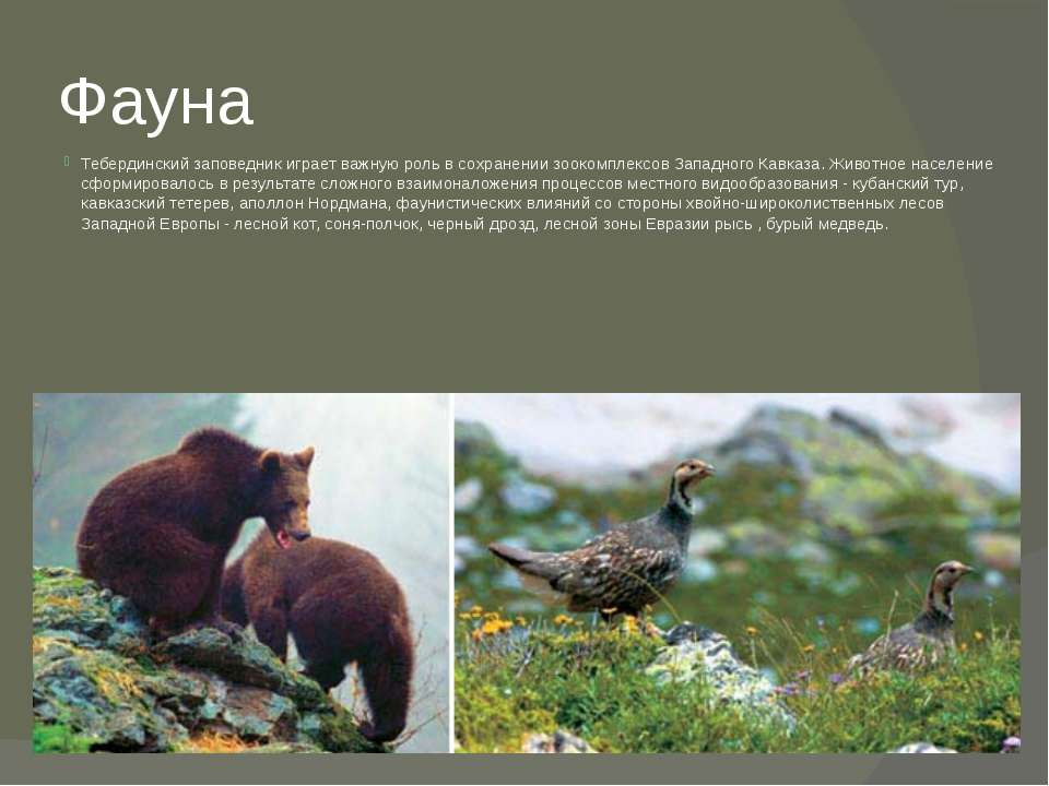 Фауна Тебердинский заповедник играет важную роль в сохранении зоокомплексов З...