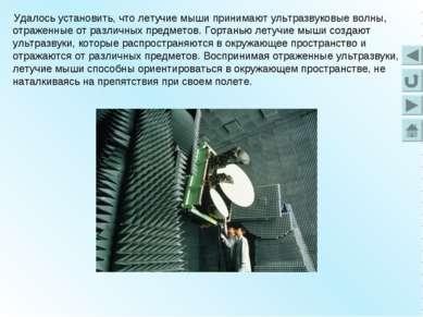 Удалось установить, что летучие мыши принимают ультразвуковые волны, отраженн...