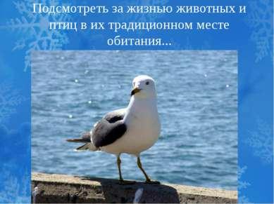 Подсмотреть за жизнью животных и птиц в их традиционном месте обитания...