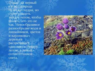 Только на первый взгляд природа Чукотки скудна, но стоит увидеть тундру летом...