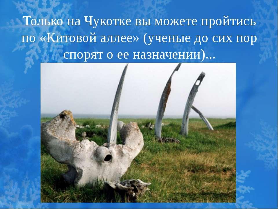 Только на Чукотке вы можете пройтись по «Китовой аллее» (ученые до сих пор сп...
