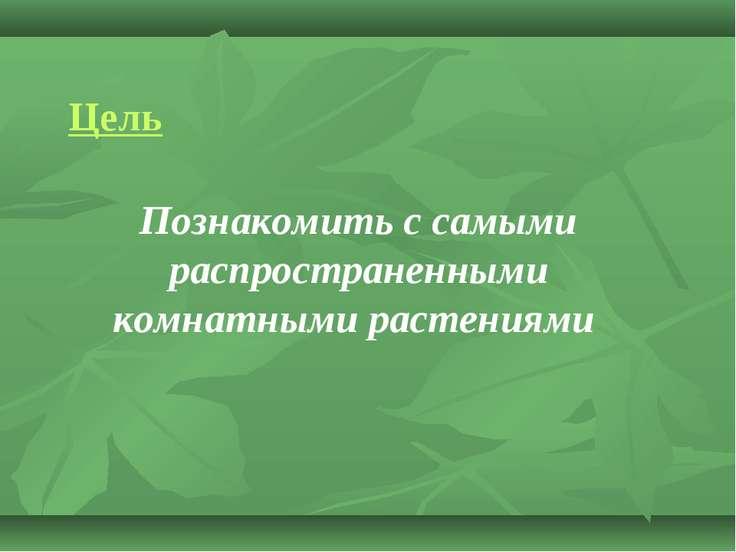 Познакомить с самыми распространенными комнатными растениями Цель