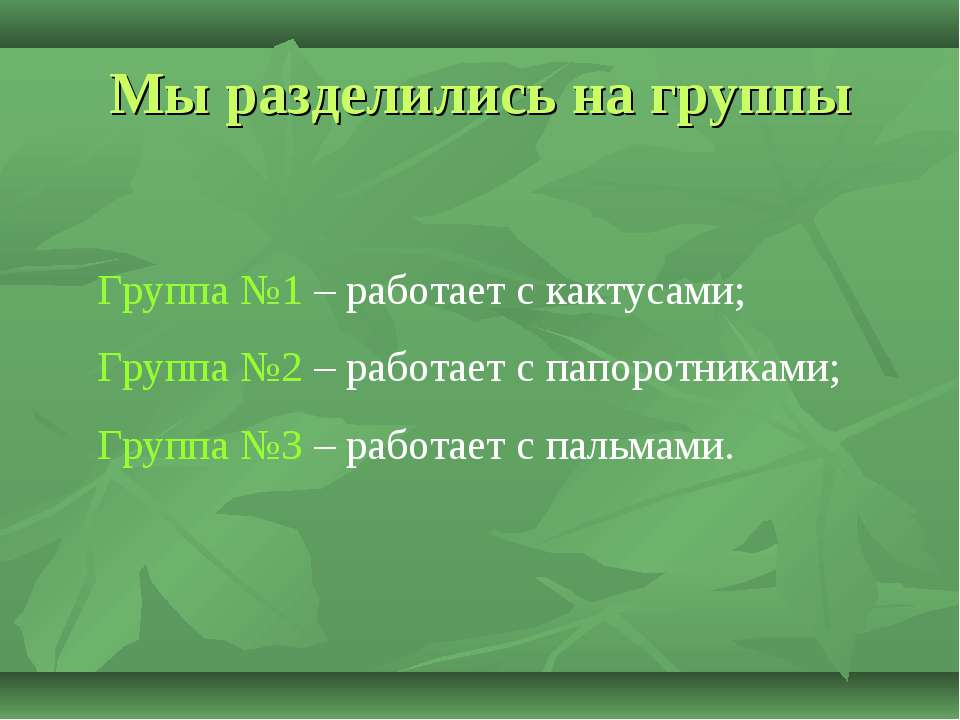 Мы разделились на группы Группа №1 – работает с кактусами; Группа №2 – работа...