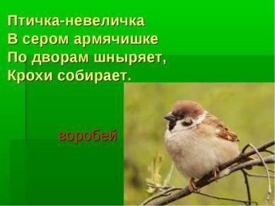 Птичка-невеличка В сером армячишке По дворам шныряет, Крохи собирает. воробей