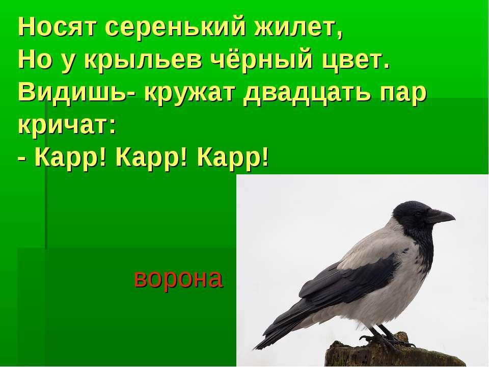 Носят серенький жилет, Но у крыльев чёрный цвет. Видишь- кружат двадцать пар ...