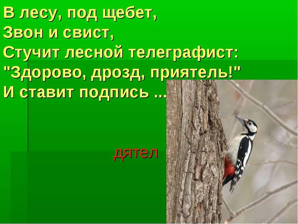 "В лесу, под щебет, Звон и свист, Стучит лесной телеграфист: ""Здорово, дрозд, ..."