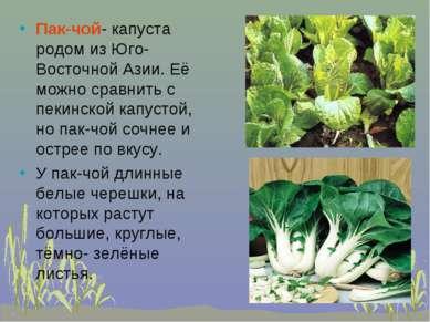 Пак-чой- капуста родом из Юго-Восточной Азии. Её можно сравнить с пекинской к...