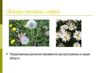 Лекарственное сырьё Лекарственные растения повсеместно распространены в нашей...