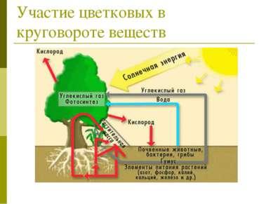 Участие цветковых в круговороте веществ