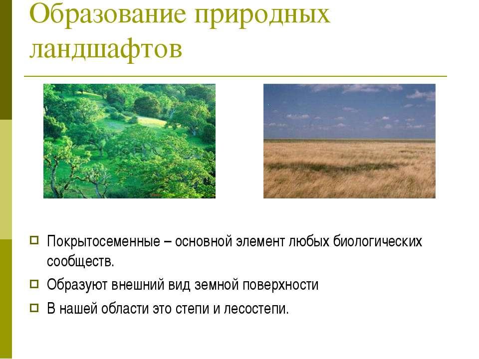 Образование природных ландшафтов Покрытосеменные – основной элемент любых био...