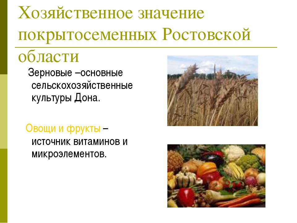 Хозяйственное значение покрытосеменных Ростовской области Зерновые –основные ...