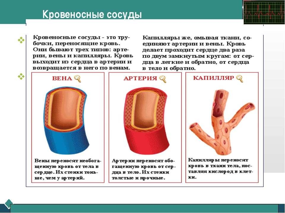 Кровеносные сосуды Артерии – это сосуды, по которым богатая кислородом кровь ...