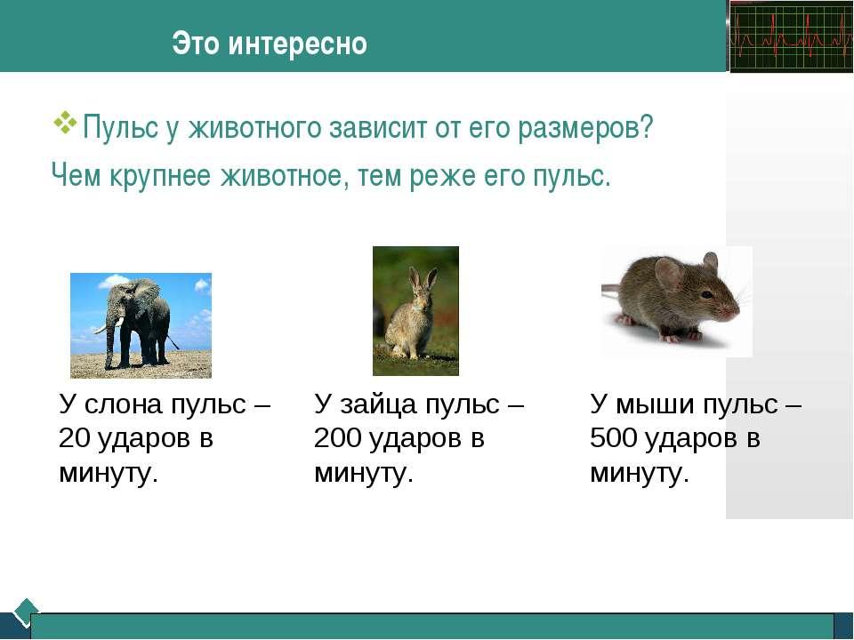 Это интересно Пульс у животного зависит от его размеров? Чем крупнее животное...