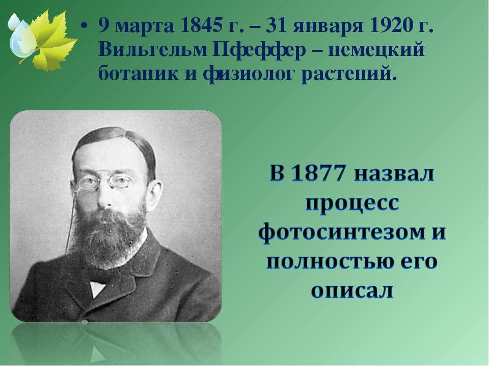 9 марта 1845 г. – 31 января 1920 г. Вильгельм Пфеффер – немецкий ботаник и фи...