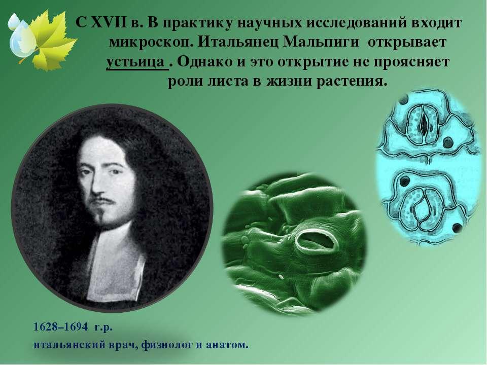 С XVII в. В практику научных исследований входит микроскоп. Итальянец Мальпиг...