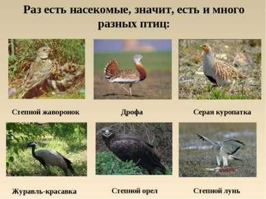 Раз есть насекомые, значит, есть и много разных птиц: Степной жаворонок Дрофа...