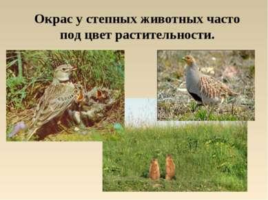 Окрас у степных животных часто под цвет растительности.