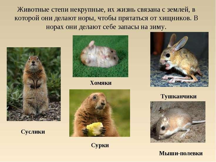 Животные степи некрупные, их жизнь связана с землей, в которой они делают нор...