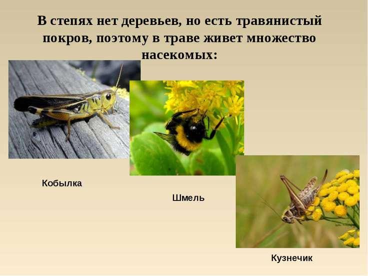 В степях нет деревьев, но есть травянистый покров, поэтому в траве живет множ...