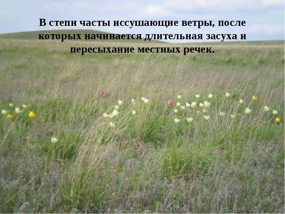 В степи часты иссушающие ветры, после которых начинается длительная засуха и ...