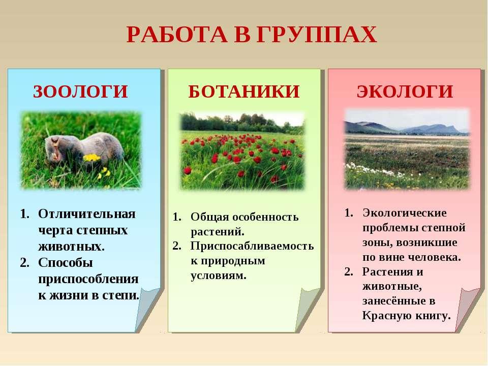 РАБОТА В ГРУППАХ ЗООЛОГИ ЭКОЛОГИ БОТАНИКИ Отличительная черта степных животны...
