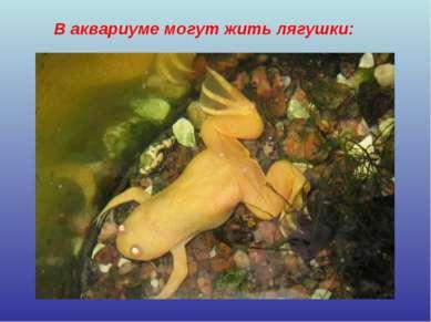 В аквариуме могут жить лягушки: