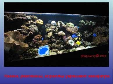 Камни, раковины, кораллы украшают аквариум.