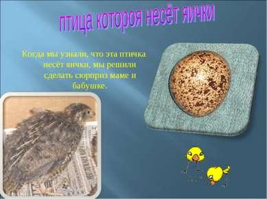 Когда мы узнали, что эта птичка несёт яички, мы решили сделать сюрприз маме и...