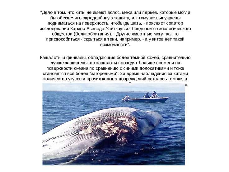 """""""Дело в том, что киты не имеют волос, меха или перьев, которые могли бы обесп..."""