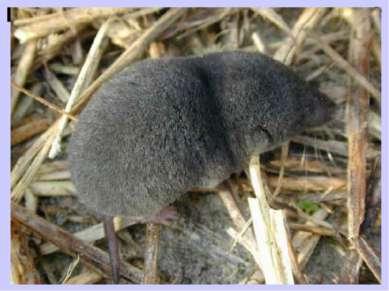 Какое животное самое маленькое? Самое маленькое животное на нашей планете — э...