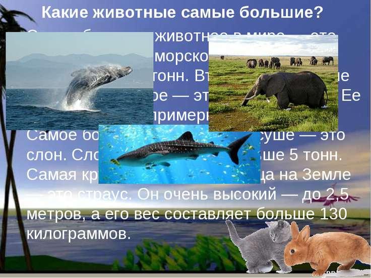 Какие животные самые большие? Самое большое животное в мире — это кит. Кит жи...