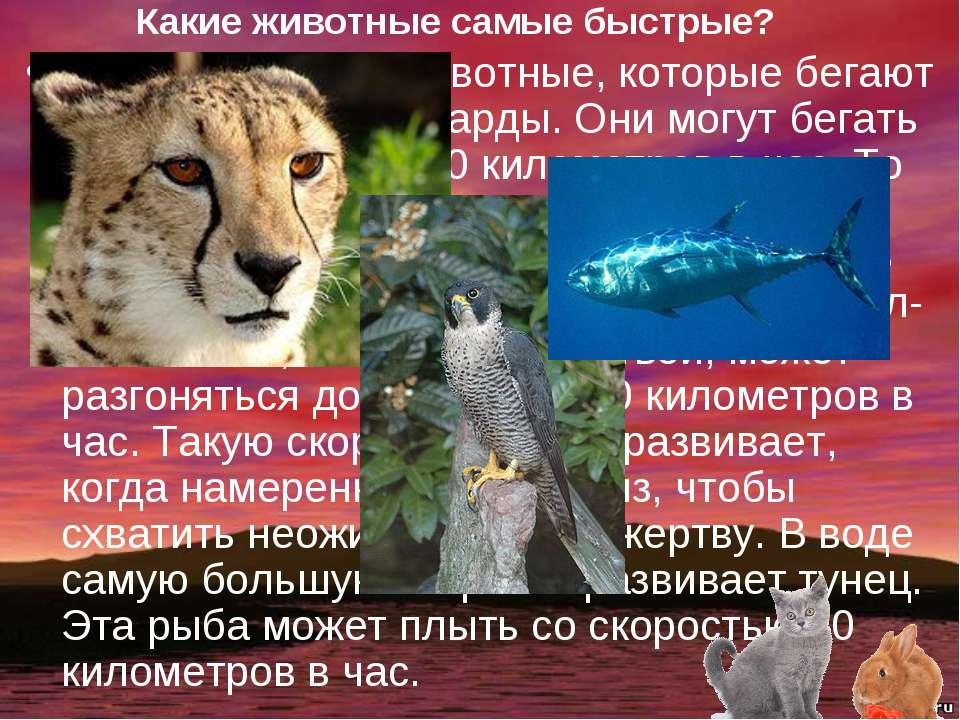 Какие животные самые быстрые? Самые быстрые животные, которые бегают по земле...