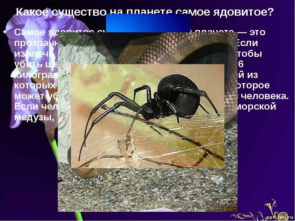 Какое существо на планете самое ядовитое? Самое ядовитое существо на нашей пл...