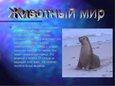 Животных арктической зоны кормит море. Морскими водорослями питаются рачки, а...