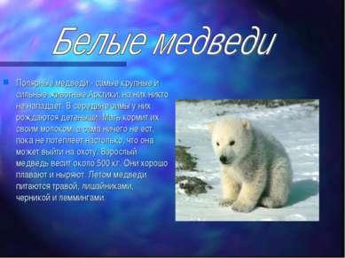 Полярные медведи - самые крупные и сильные животные Арктики, на них никто не ...