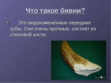 Что такое бивни? Это видоизменённые передние зубы. Они очень прочные, состоят...