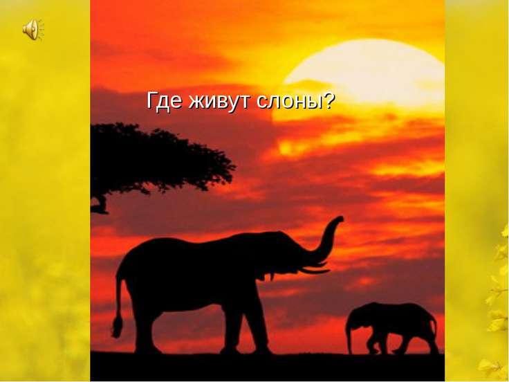 Где живут слоны?