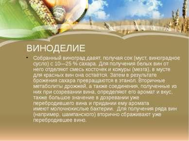 ВИНОДЕЛИЕ Собранный виноград давят, получая сок (муст,виноградное сусло) с 1...
