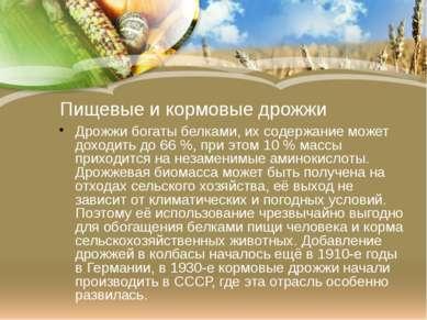 Пищевые и кормовые дрожжи Дрожжи богатыбелками, их содержание может доходить...