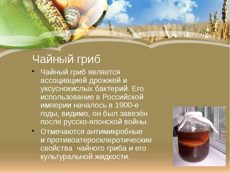 Чайный гриб Чайный гриб является ассоциацией дрожжей и уксуснокислых бактерий...