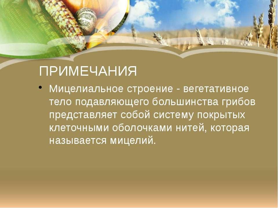 ПРИМЕЧАНИЯ Мицелиальное строение -вегетативное тело подавляющего большинства...