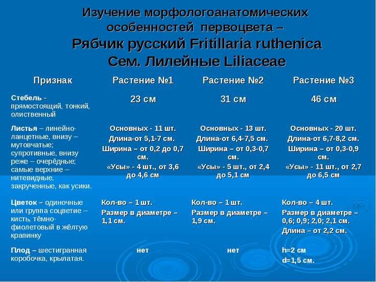 Изучение морфологоанатомических особенностей первоцвета – Рябчик русский Frit...