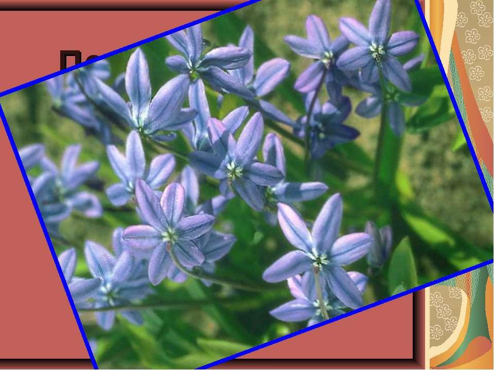 Под ногой в лесу трещит и хрустит валежник. Ищем мы цветок весны, Голубой……