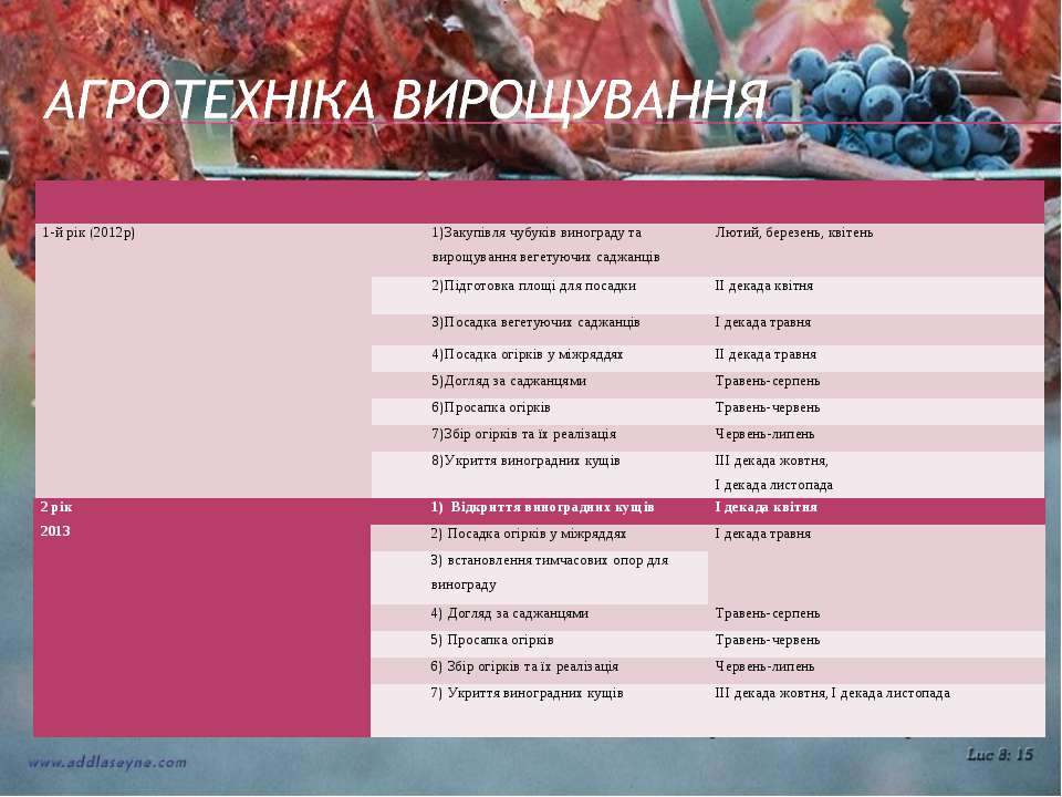 1-й рік (2012р) 1)Закупівля чубуків винограду та вирощування вегетуючих саджа...